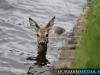 diertewatermuntendam26mei2013hm-08