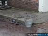 schoorsteenbrandwinschoten16nov2012hm_05