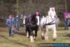 TrekpaardenSellingen_17dec2011_054