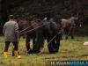 TrekpaardenSellingen_17dec2011_002
