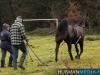 TrekpaardenSellingen_17dec2011_004