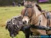 TrekpaardenSellingen_17dec2011_006