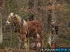 TrekpaardenSellingen_17dec2011_008