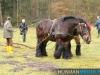 TrekpaardenSellingen_17dec2011_009
