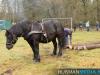 TrekpaardenSellingen_17dec2011_011