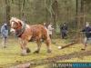 TrekpaardenSellingen_17dec2011_013