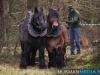 TrekpaardenSellingen_17dec2011_014