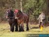 TrekpaardenSellingen_17dec2011_015