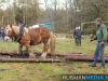 TrekpaardenSellingen_17dec2011_022