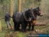 TrekpaardenSellingen_17dec2011_024