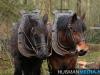 TrekpaardenSellingen_17dec2011_025