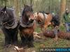 TrekpaardenSellingen_17dec2011_026