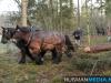 TrekpaardenSellingen_17dec2011_028