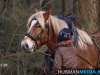 TrekpaardenSellingen_17dec2011_030