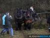 TrekpaardenSellingen_17dec2011_034
