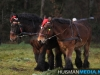 TrekpaardenSellingen_17dec2011_043