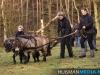 TrekpaardenSellingen_17dec2011_047
