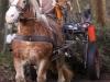 TrekpaardenSellingen_17dec2011_048