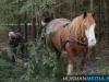 TrekpaardenSellingen_17dec2011_049