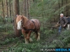 TrekpaardenSellingen_17dec2011_050