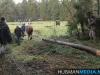TrekpaardenSellingen_17dec2011_052