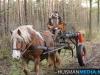 TrekpaardenSellingen_17dec2011_053
