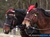 TrekpaardenSellingen_17dec2011_055