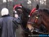 TrekpaardenSellingen_17dec2011_056