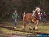 TrekpaardenSellingen_17dec2011_058