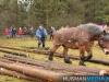 TrekpaardenSellingen_17dec2011_060