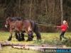 TrekpaardenSellingen_17dec2011_061