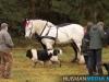 TrekpaardenSellingen_17dec2011_063
