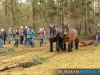 TrekpaardenSellingen_17dec2011_066