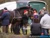 TrekpaardenSellingen_17dec2011_072