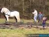 TrekpaardenSellingen_17dec2011_075