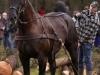 TrekpaardenSellingen_17dec2011_078