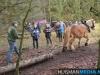 TrekpaardenSellingen_17dec2011_079