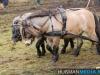 TrekpaardenSellingen_17dec2011_082
