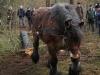 TrekpaardenSellingen_17dec2011_090