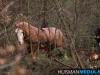 TrekpaardenSellingen_17dec2011_091