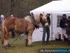 TrekpaardenSellingen_17dec2011_099
