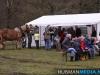 TrekpaardenSellingen_17dec2011_103
