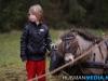 TrekpaardenSellingen_17dec2011_105