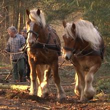 preview evenementregistratie trekpaarden sellingen